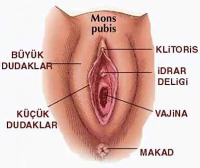 Vajina Iğrenç Bir Organdır Inci Sözlük