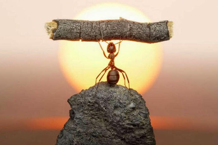 Karıncanın Ibret Verici Hikayesi Inci Sözlük